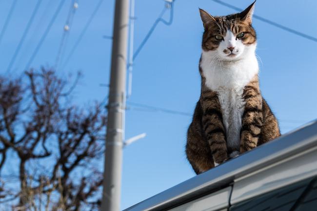 「島で猫の世話をしませんか?給料も出ます。」との求人に応募が殺到