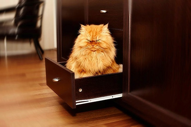 a2014-10-6garfi-evil-grumpy-persian-cat-18__700