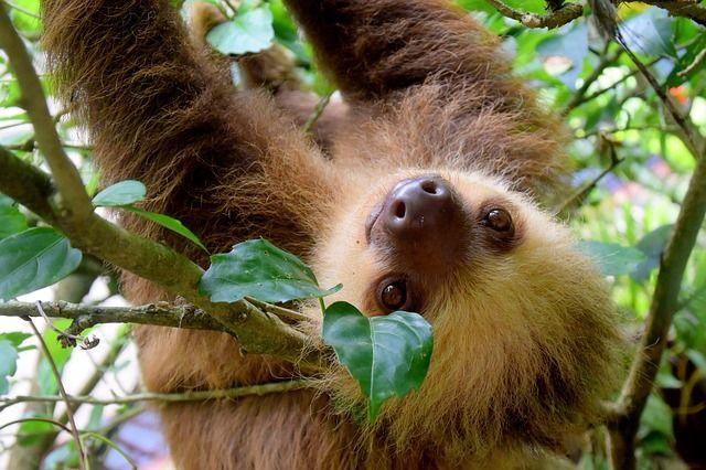 sloth-1879999_640