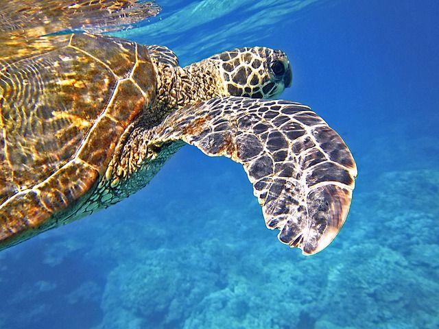 sea-turtle-547163_640