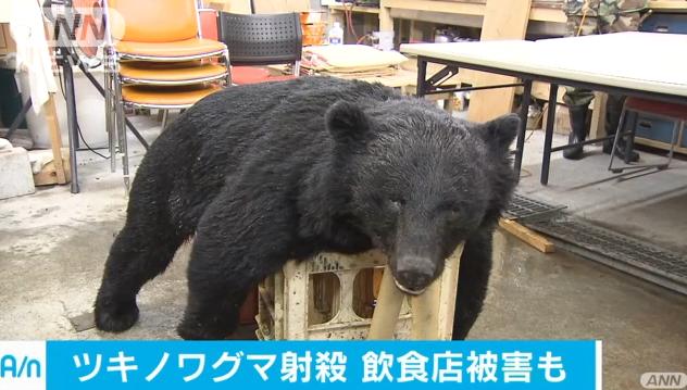青梅市でクマに飲食店荒らされる 猟友会が射殺