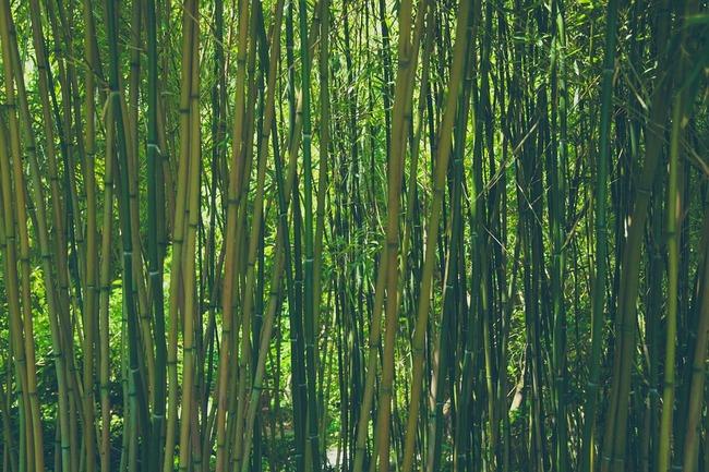 bamboo-828703_960_720
