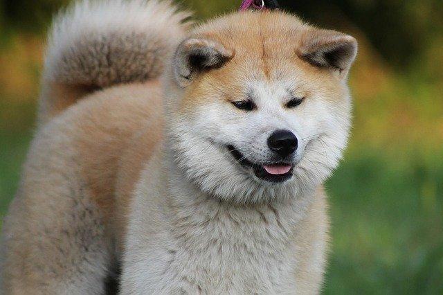 【悲報】 ジッジ(81)、飼い犬がケンカをはじめたので自分も相手の飼い主(43)をボコボコにする