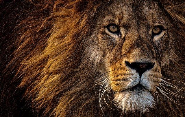 ライオン「俺は百獣の王だ」 ダイヤモンド「私は絶対砕けない」