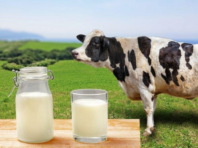 乳牛「てめえみてーな田舎モンは家に帰ってミルクでも飲んでやがれ!!!」モオォォォォォ