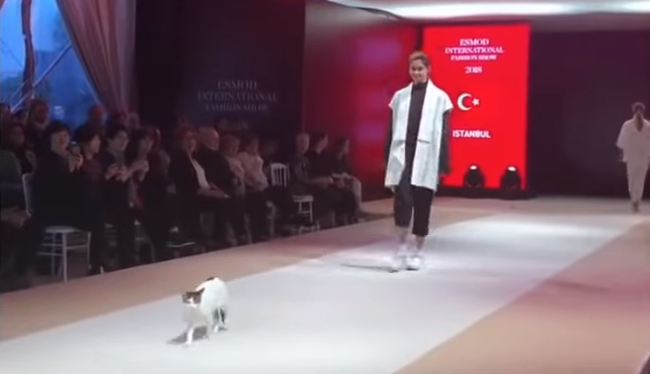 Real Catwalk   YouTube