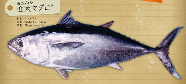 近大魚図鑑