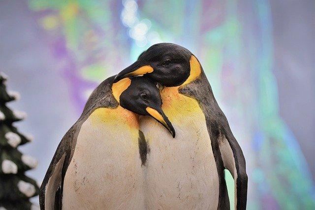 penguin-4675025_640