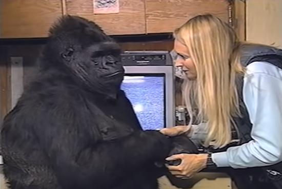 A Conversation With Koko   YouTube