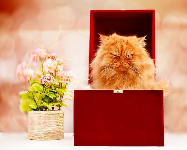 a2014-10-6garfi-evil-grumpy-persian-cat-25__700