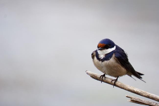 bird-1221890_960_720 (2)