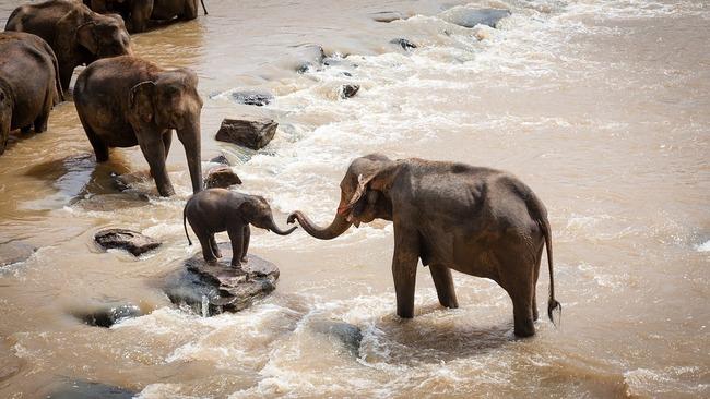elephants-1900332_960_720