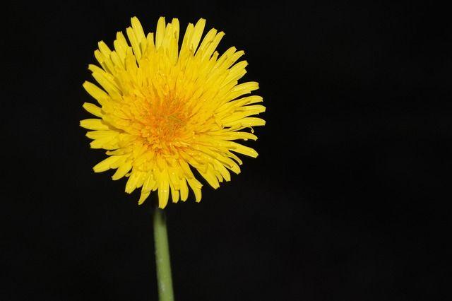 yellow-flower-2792093_640
