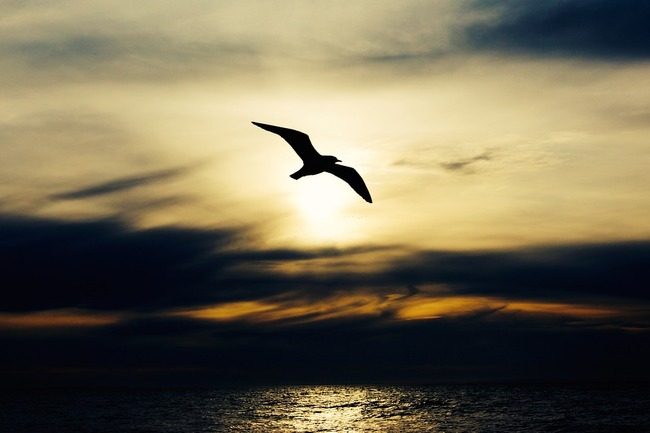 seabird-768584_960_720