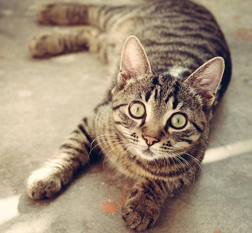 cat-618470_960_720