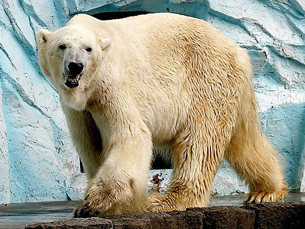 p-bear_img01-l
