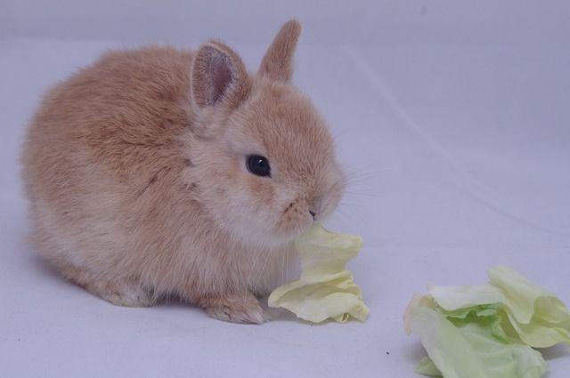 rabbit-3713392_640