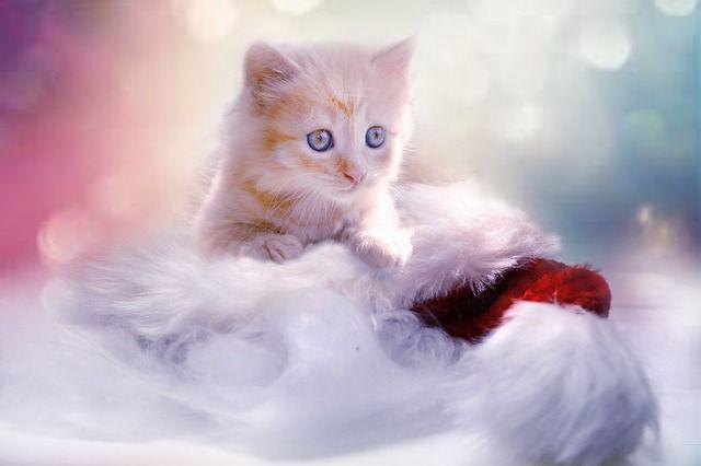 kitten-1856134_640