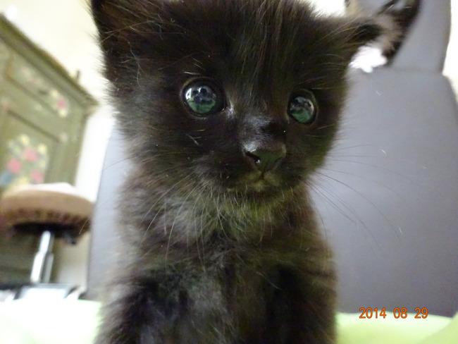 [画像]  子猫拾ったったぁあ!