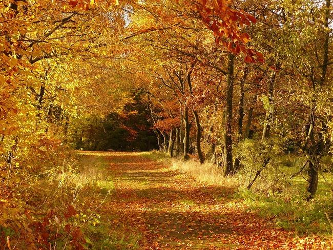 autumn-279408_960_720