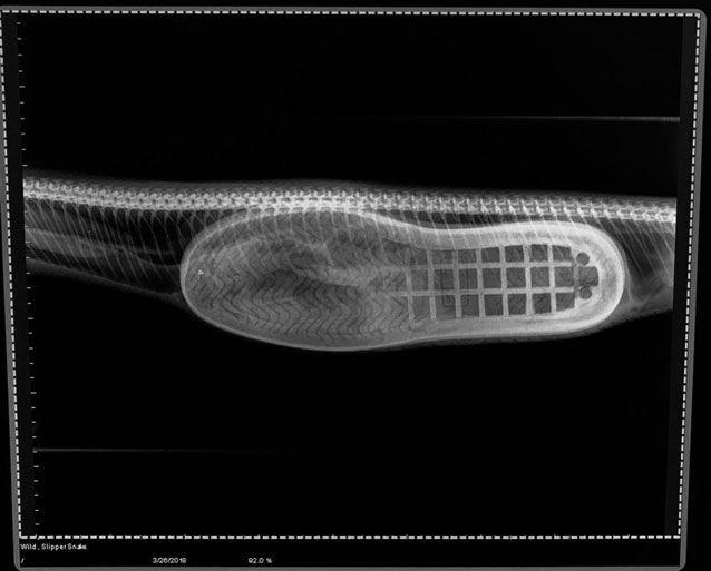 snake-slipper-art3