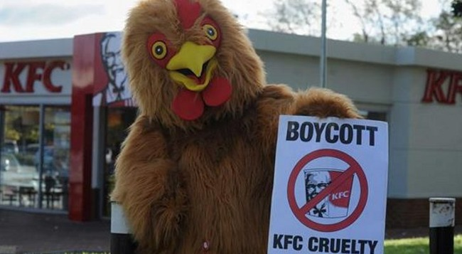 KFC-Protester-Dressed-as-a-Chicken-Gets-Food-Thrown-at-Him