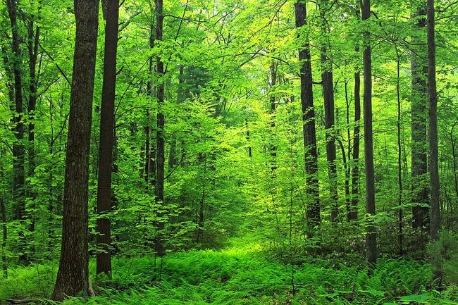 woods-1849451_960_720