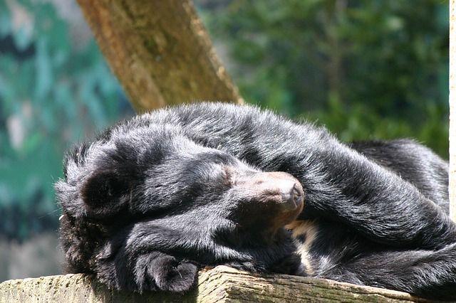 bear-74155_640