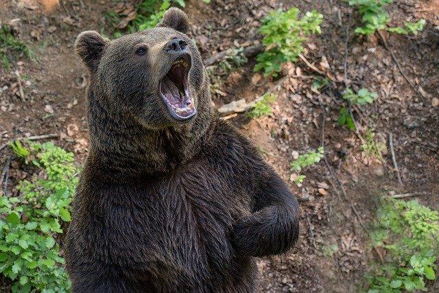 ロシアの少年、動物園に一緒に来てた女友達2人に「勇敢な所を見せる」とヒグマの檻に入り死亡