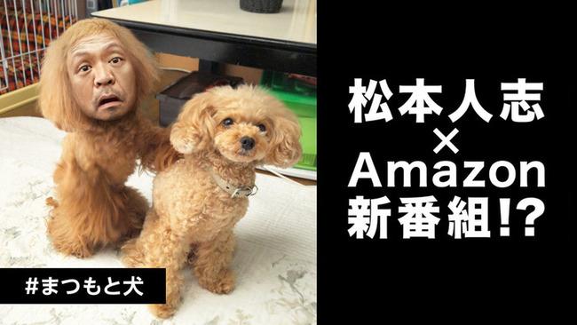 Matsumotodog_fixw_730_hq