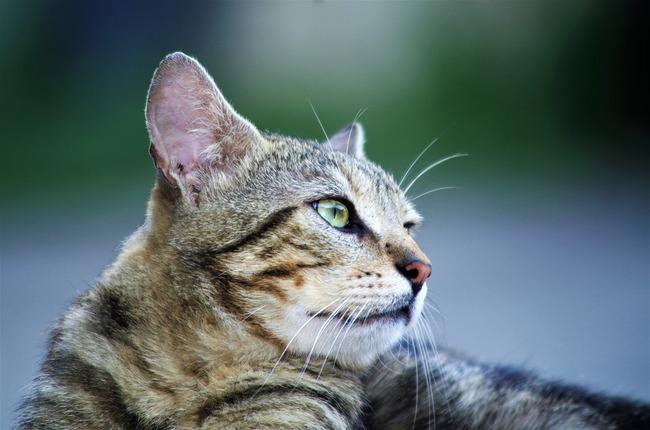 cat-3522913_960_720