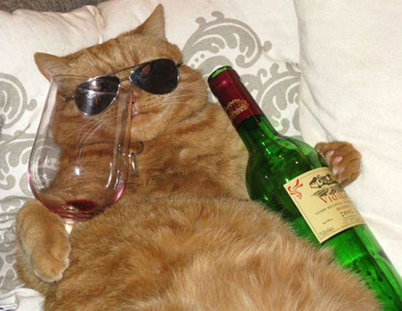 gatto-vino