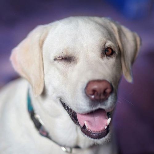 dog-2944964_640