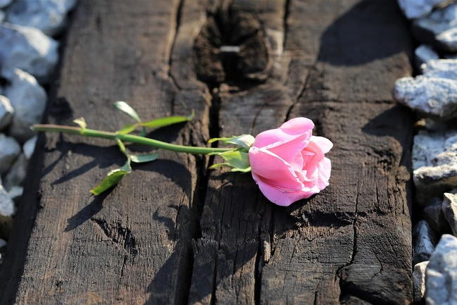 pink-rose-on-railway-3538324_960_720