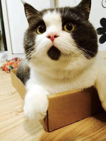 [画像]  いつもビックリしている猫がいた