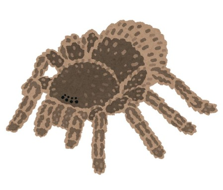 bug_kumo_tarantula
