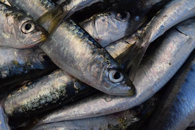 sardines-1460679_960_720