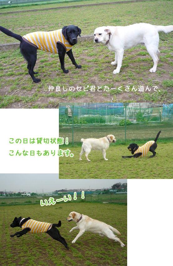 2011ブログ開始_1