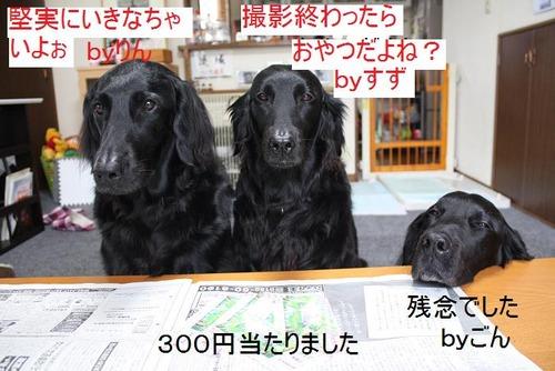 001 (2)たからくじ
