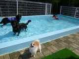みんなでプール