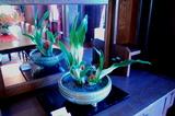 花で彩る西洋館23