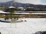 賀茂川の雪景色