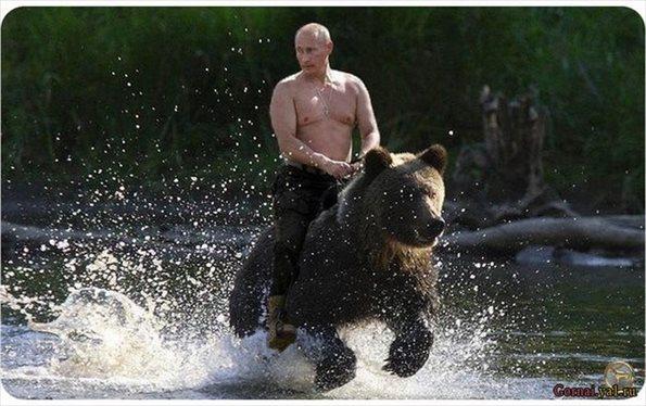 「プーチン 熊」の画像検索結果