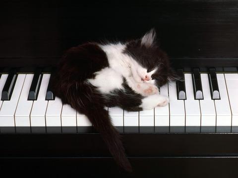cate-cat