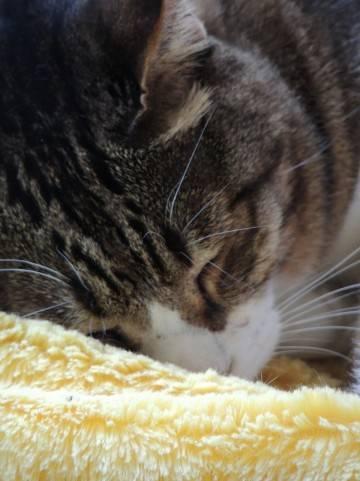 【超悲報】ワイの彼女、猫を被ってた