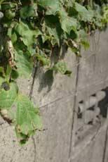 俺の実家が「ナニコレ珍百景」に登録された・・・・・・