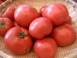 オイシックストマト