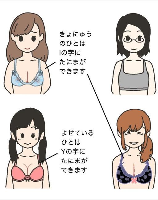 【画像】巨乳と虚乳を見分ける方法がついに発見されるwwwwwww