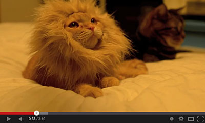 youtube動画のライオンの画像