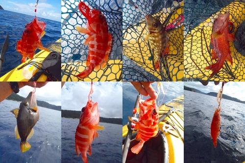 20111129釣り